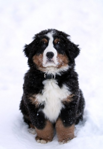 Собачий портрет 114108--40018180-m549x500-ub4fa5