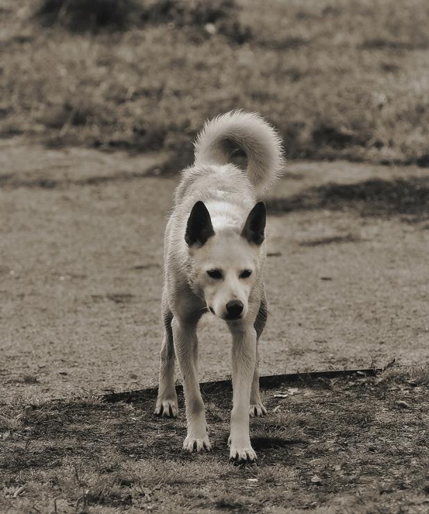 Собачий портрет - Страница 19 141876-63bbd-60430204-m750x740-u2d230