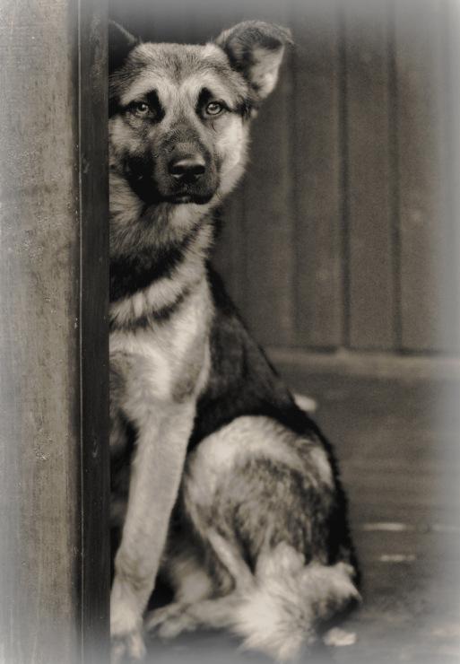 Собачий портрет - Страница 19 141876-fda2f-60458481-m750x740-u60a19