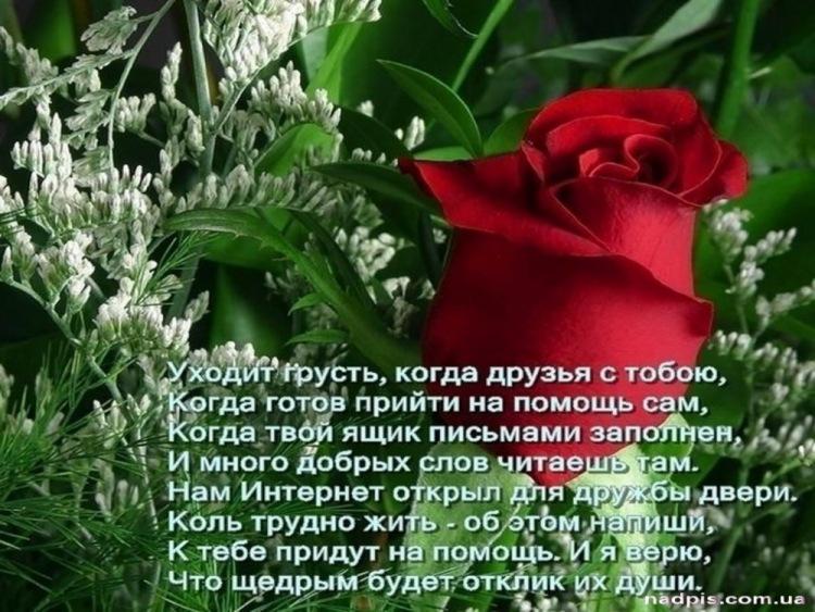 http://data14.gallery.ru/albums/gallery/176712-b42fa-41304645-m750x740-u8259d.jpg