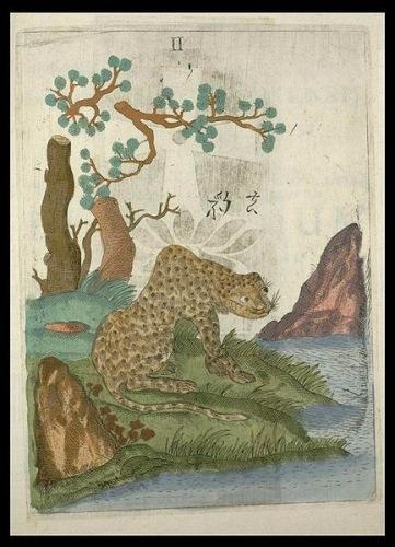 Китайский леопард. Рисунок М. Боима. Илл. из Википедии.