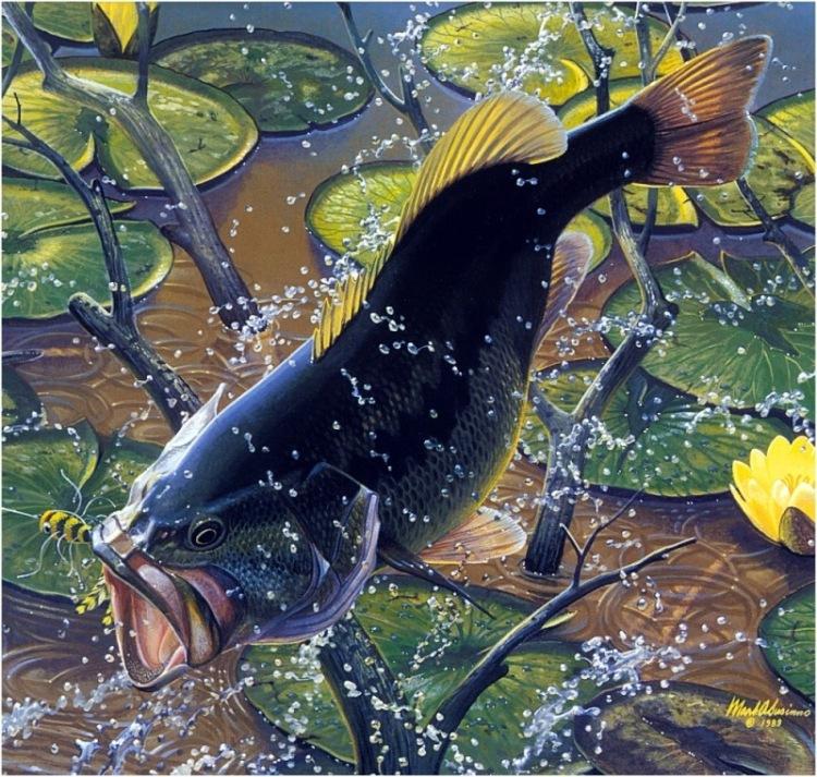 Марк Сузино: сокровища подводного мира.