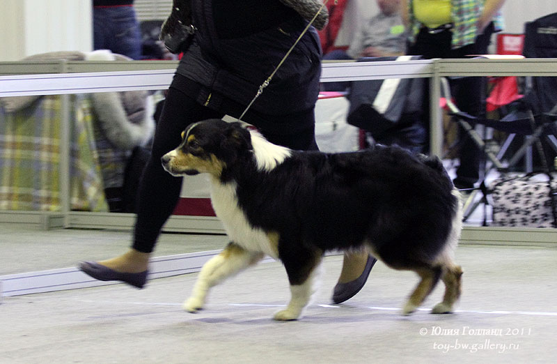 Выставочные успехи наших собак - Страница 40 205407--42010930--u1a880