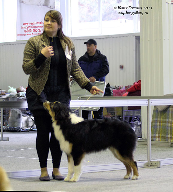 Выставочные успехи наших собак - Страница 40 205407--42010931--u9fc2e