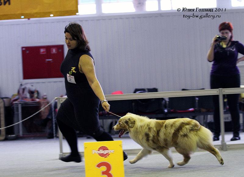 Выставочные успехи наших собак - Страница 40 205407--42010933--ua372a