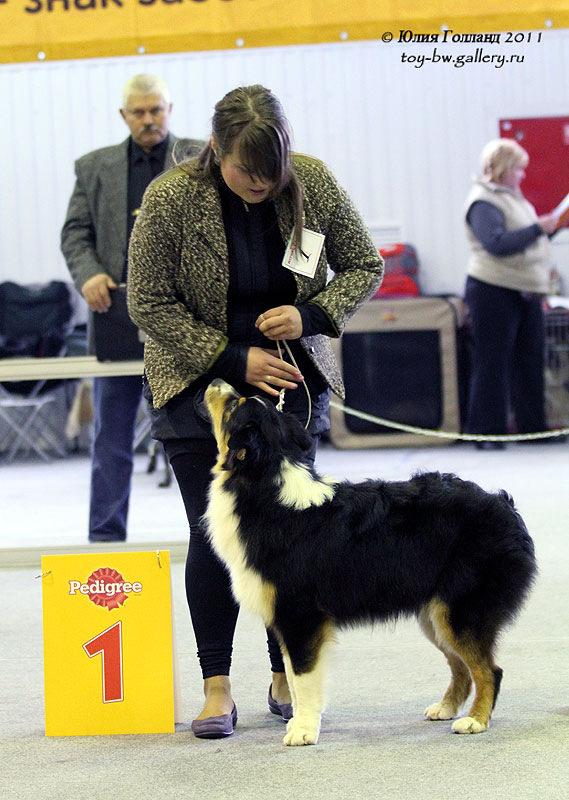 Выставочные успехи наших собак - Страница 40 205407--42010937--ua8364