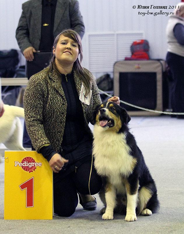 Выставочные успехи наших собак - Страница 40 205407--42010938--ub82c7
