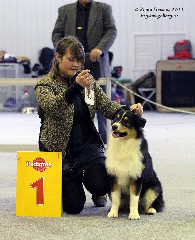 Выставочные успехи наших собак - Страница 40 205407--42010940--u80088