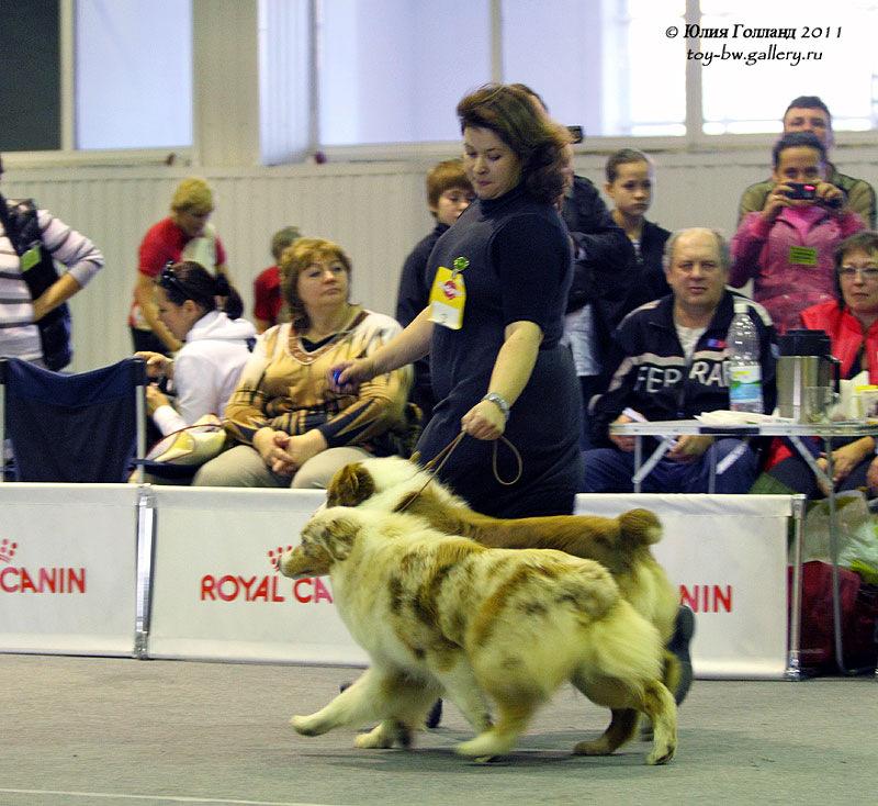 Выставочные успехи наших собак - Страница 40 205407--42010942--u99b5b