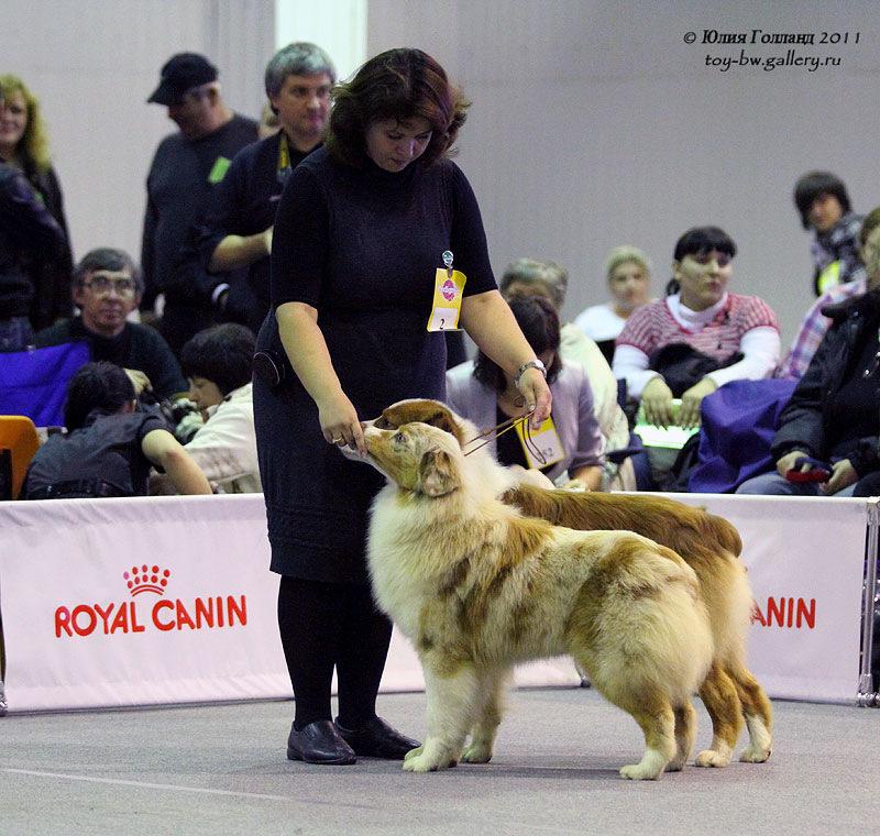 Выставочные успехи наших собак - Страница 40 205407--42010946--ub4522