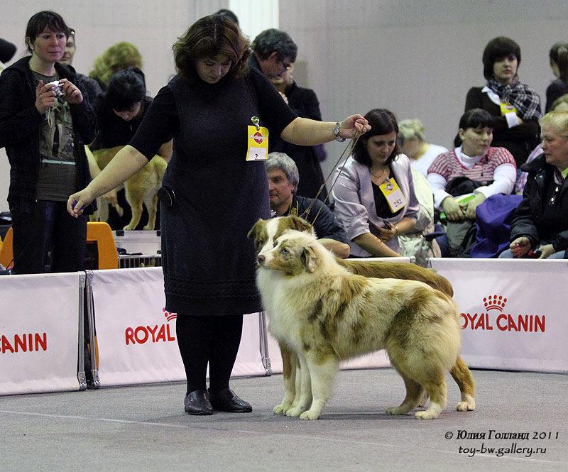 Выставочные успехи наших собак - Страница 40 205407--42010947--u021a9