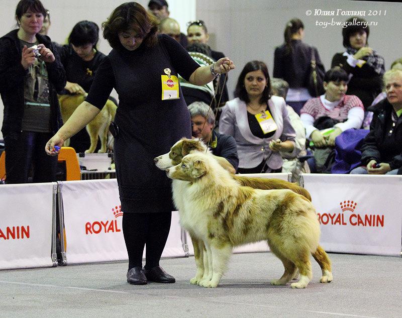 Выставочные успехи наших собак - Страница 40 205407--42010950--ub932c