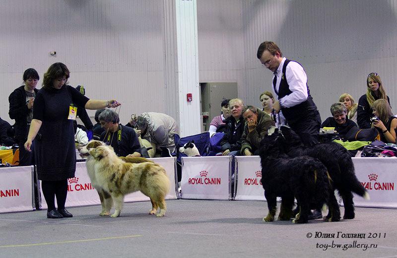 Выставочные успехи наших собак - Страница 40 205407--42010954--u6ca1c