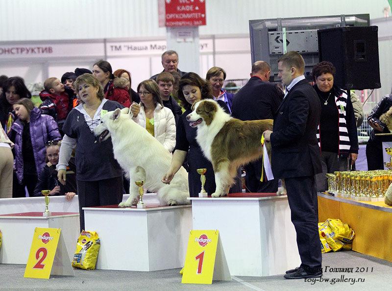Выставочные успехи наших собак - Страница 40 205407--42010986--ua6942