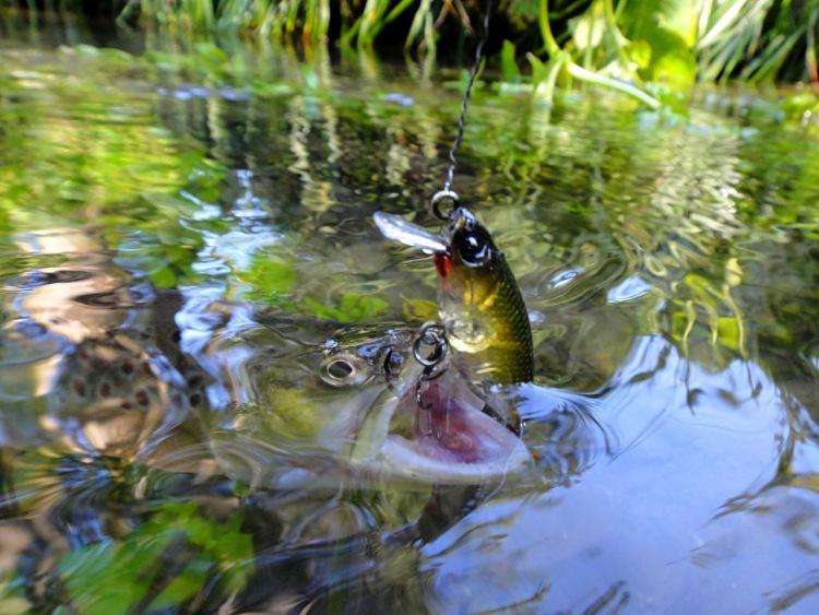 ахуительная рыбалка