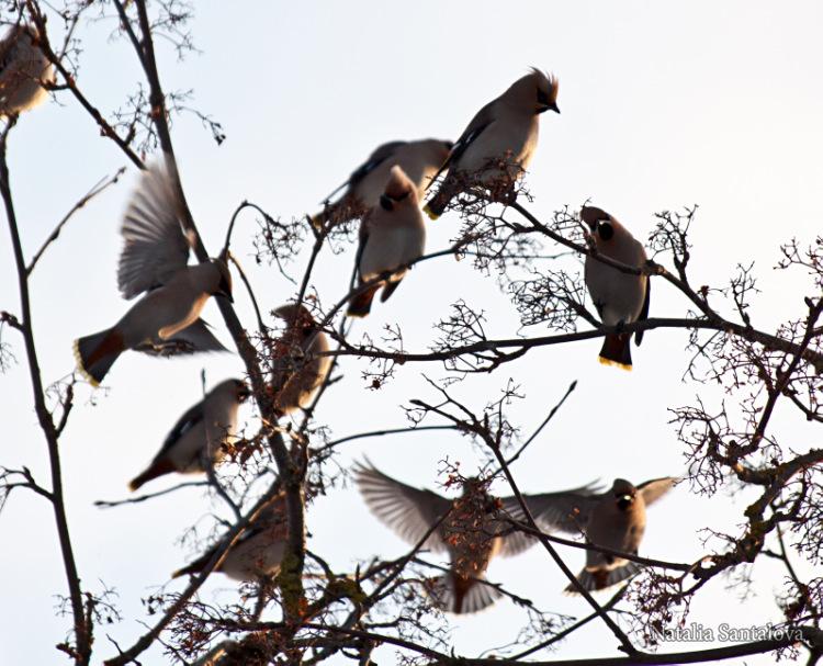 Зимние птицы подмосковья