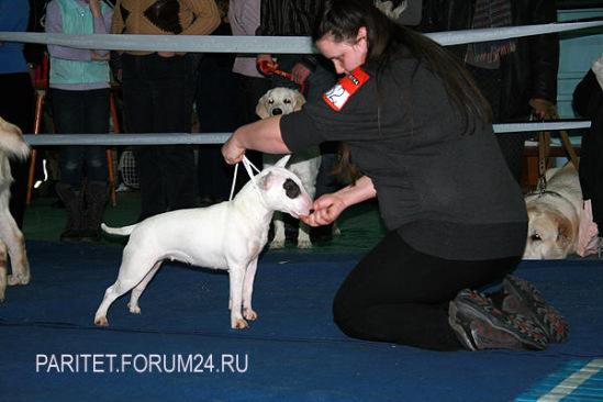 http://data14.gallery.ru/albums/gallery/80251--41628771-m549x500-ufc5a6.jpg